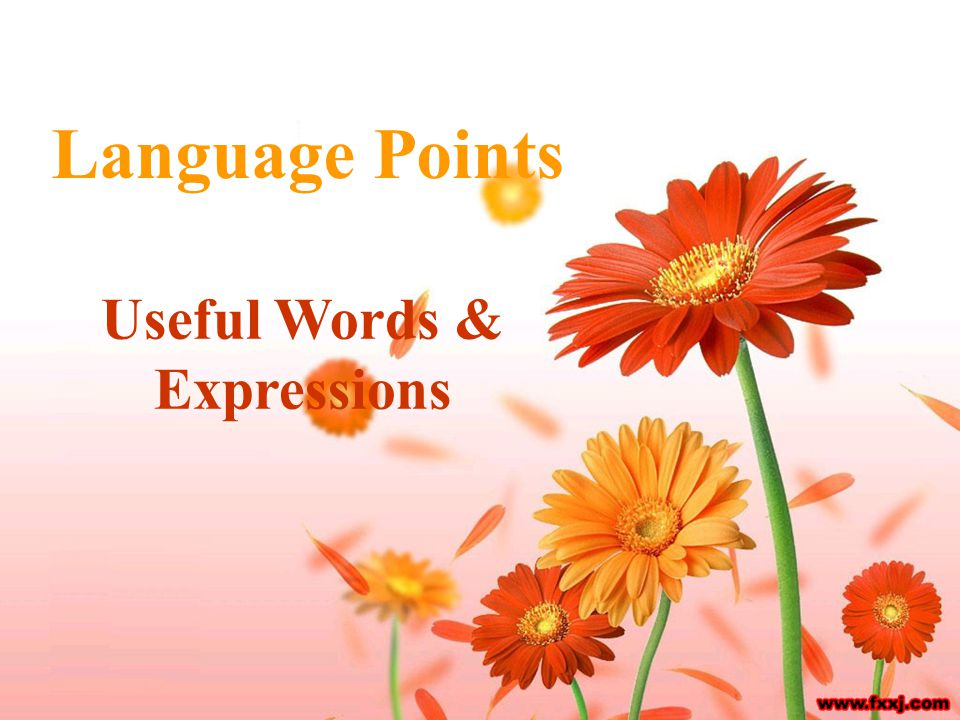Language Points Useful Words & Expressions
