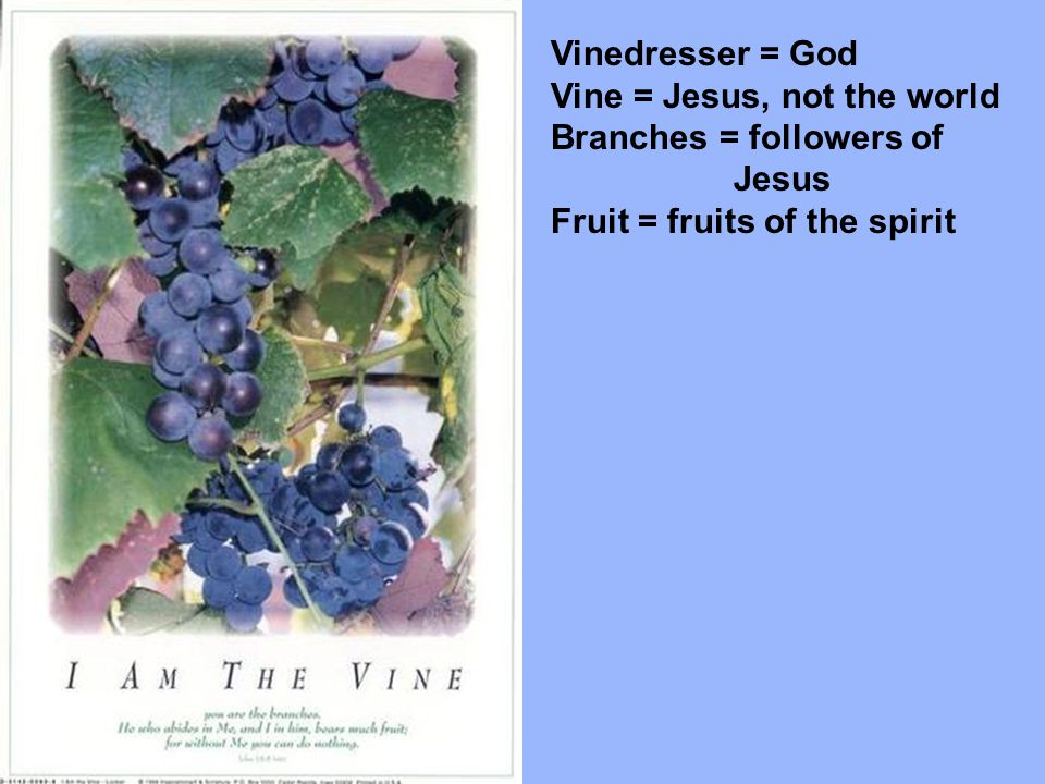 Vinedresser = God Vine = Jesus, not the world Branches = followers of Jesus Fruit = fruits of the spirit Cutting off branches = God's rejection Pruning = Chastisements & experiences