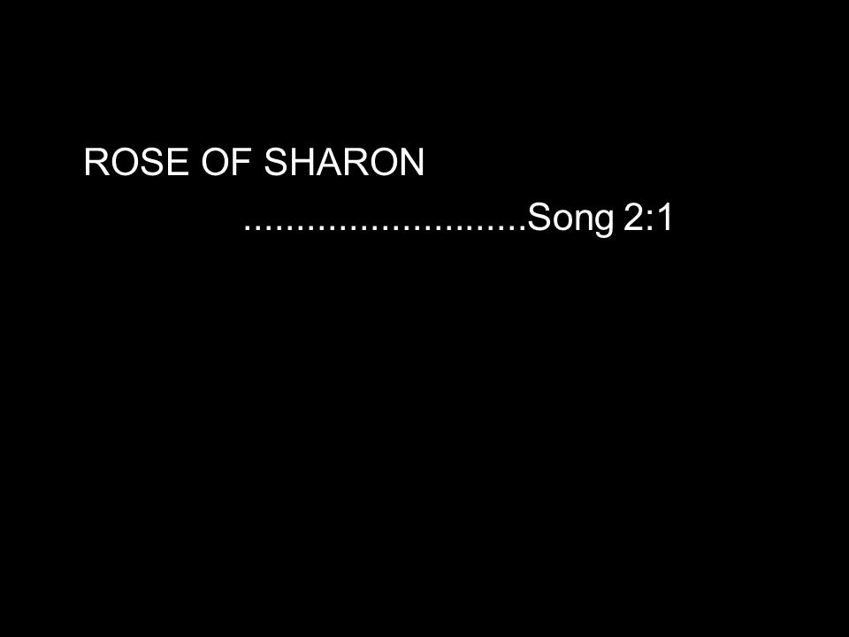 ROSE OF SHARON...........................Song 2:1