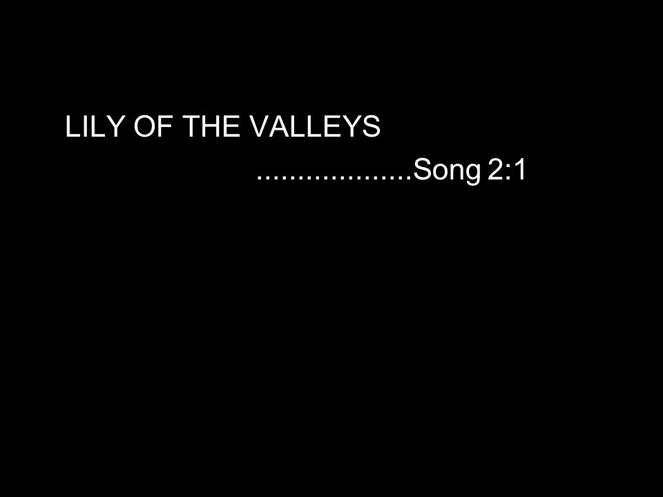 LILY OF THE VALLEYS...................Song 2:1