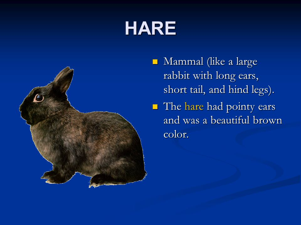HARE Mammal (like a large rabbit with long ears, short tail, and hind legs).