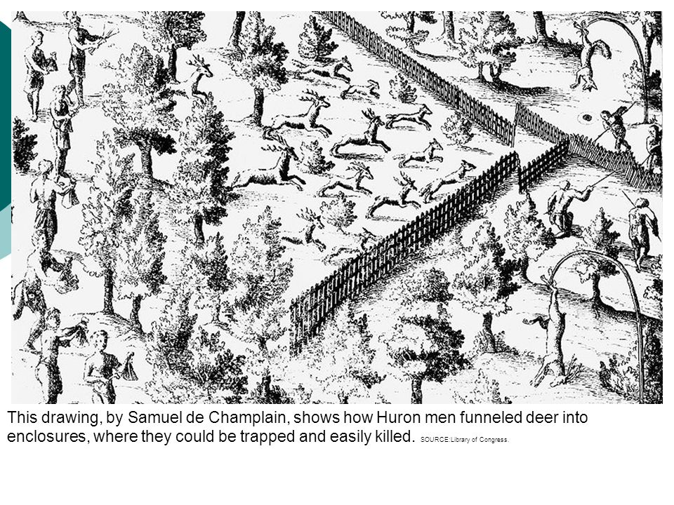 This drawing, by Samuel de Champlain, shows how Huron men funneled deer into enclosures, where they could be trapped and easily killed. SOURCE:Library