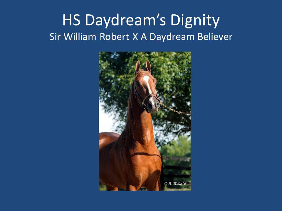HS Daydream's Dignity Sir William Robert X A Daydream Believer