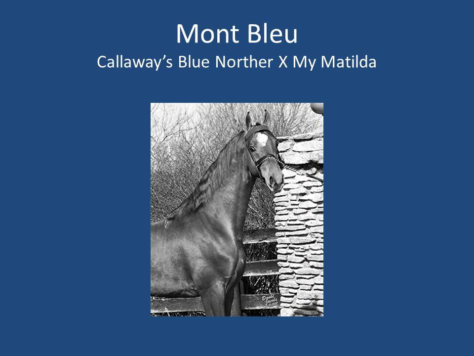 Mont Bleu Callaway's Blue Norther X My Matilda