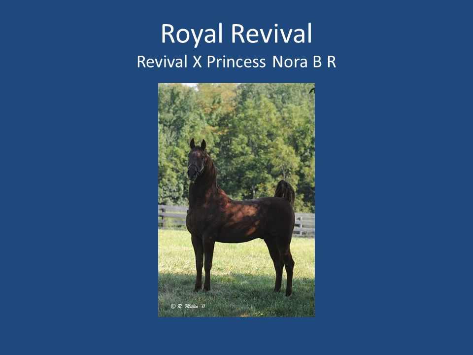 Royal Revival Revival X Princess Nora B R