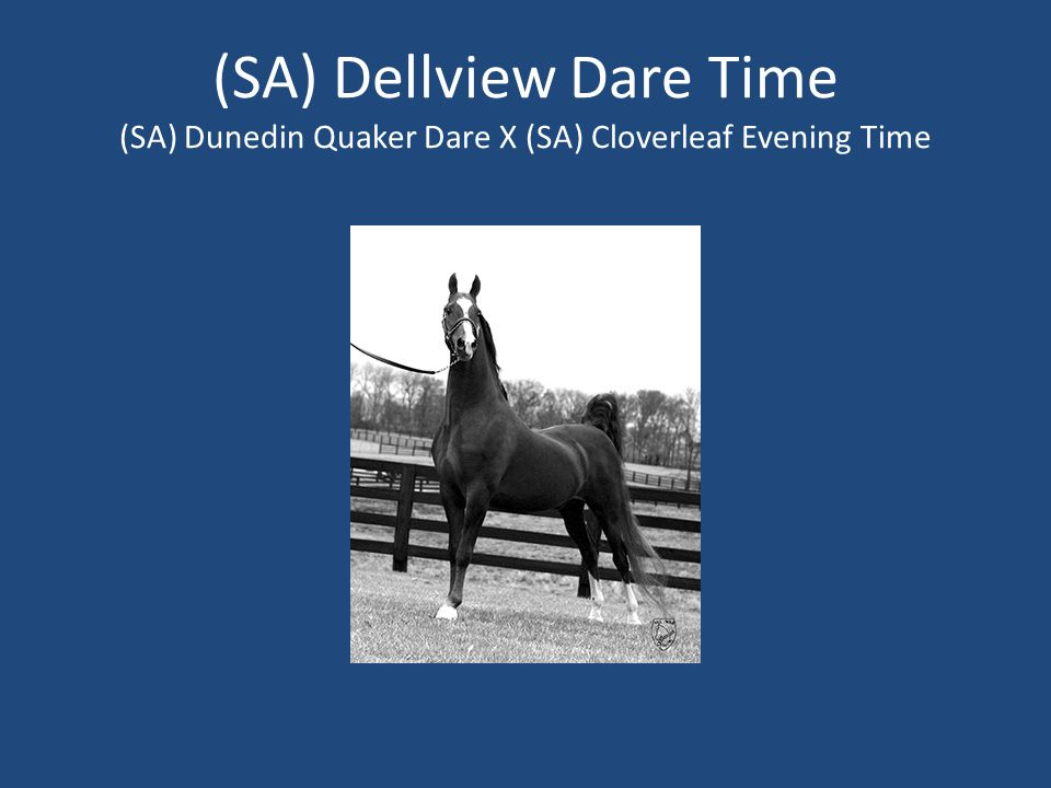 (SA) Dellview Dare Time (SA) Dunedin Quaker Dare X (SA) Cloverleaf Evening Time