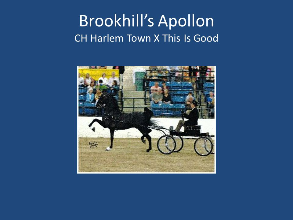 Brookhill's Apollon CH Harlem Town X This Is Good