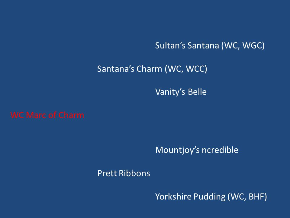 Sultan's Santana (WC, WGC) Santana's Charm (WC, WCC) Vanity's Belle WC Marc of Charm Mountjoy's ncredible Prett Ribbons Yorkshire Pudding (WC, BHF)