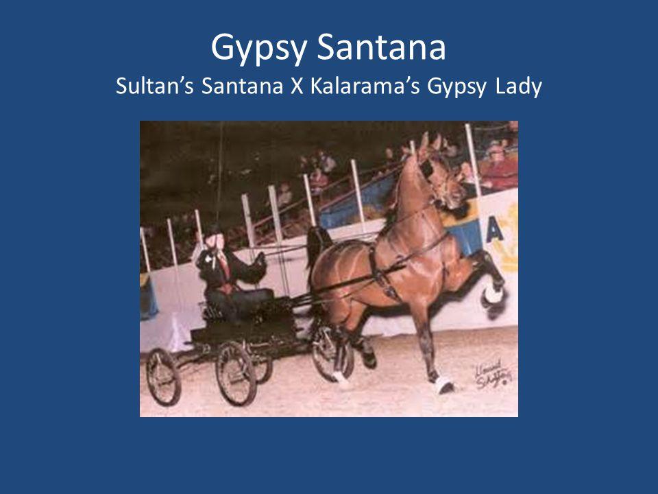 Gypsy Santana Sultan's Santana X Kalarama's Gypsy Lady