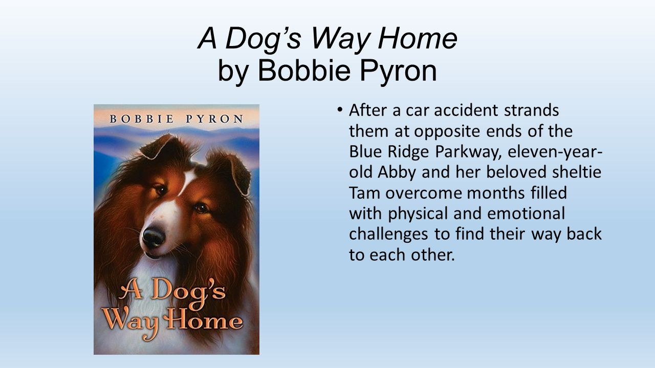 A Dog's Way Home by Bobbie Pyron After a car accident strands them at opposite ends of the Blue Ridge Parkway, eleven-year- old Abby and her beloved sheltie Tam overcome months filled with physical and emotional challenges to find their way back to each other.