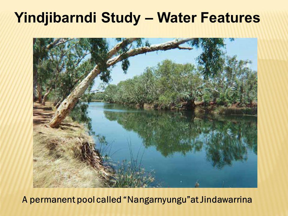 Yindjibarndi Study – Water Features A permanent pool called Nangarnyungu at Jindawarrina