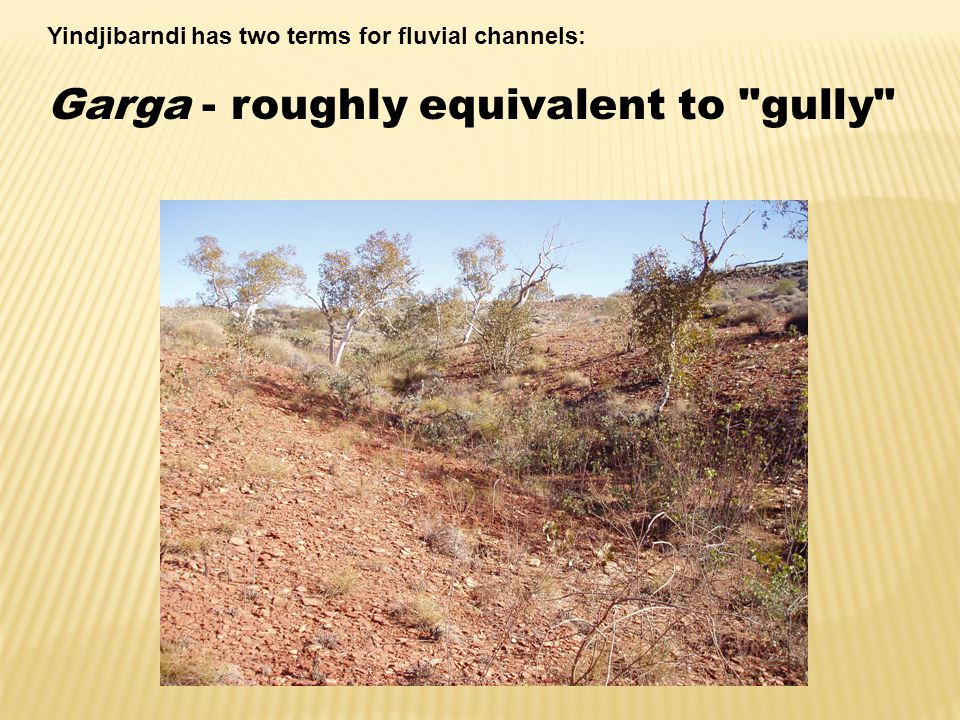 Yindjibarndi has two terms for fluvial channels: Garga - roughly equivalent to gully