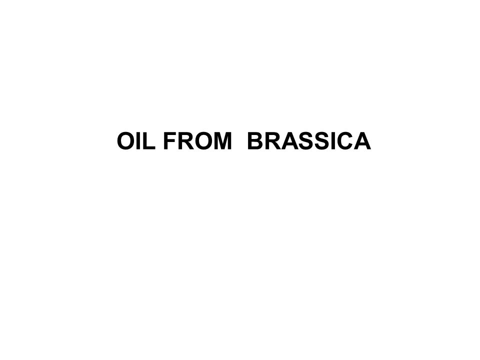 OIL FROM BRASSICA