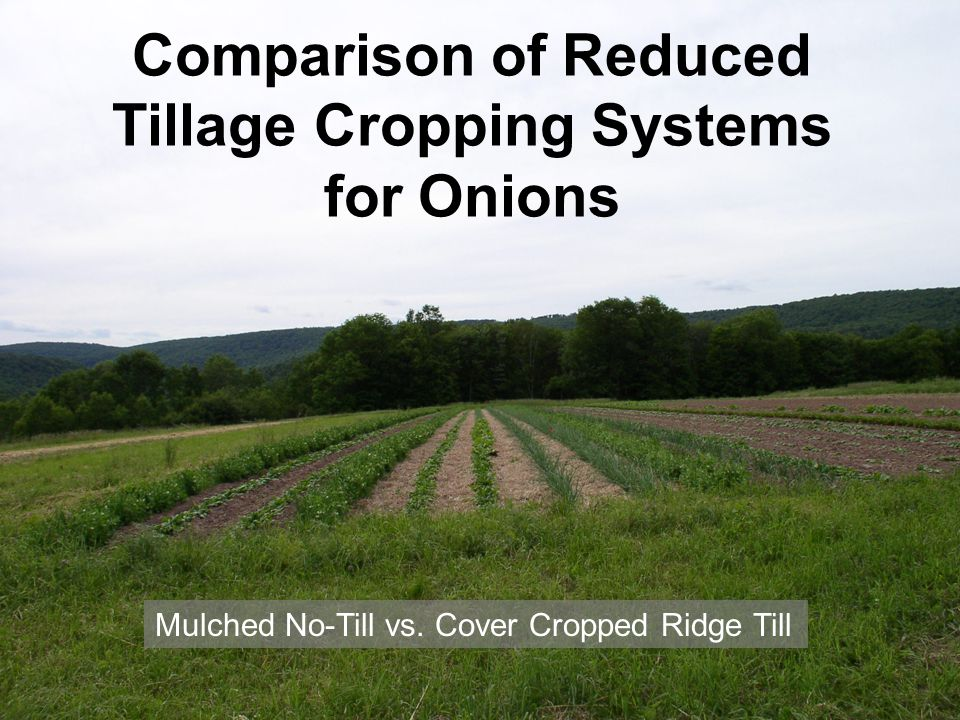 Comparison of Reduced Tillage Cropping Systems for Onions Mulched No-Till vs.