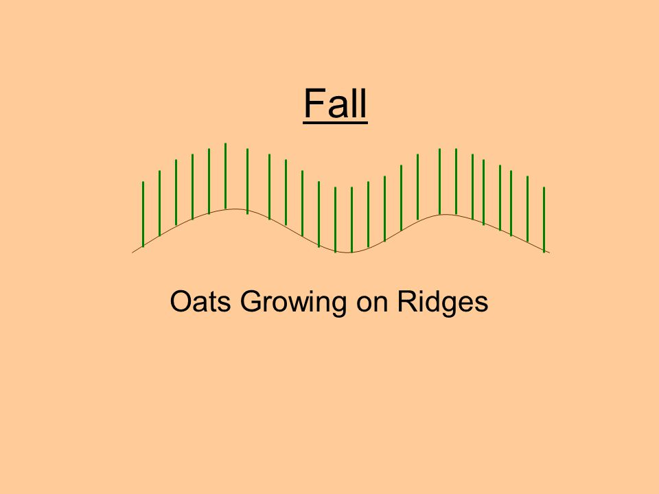 Fall Oats Growing on Ridges