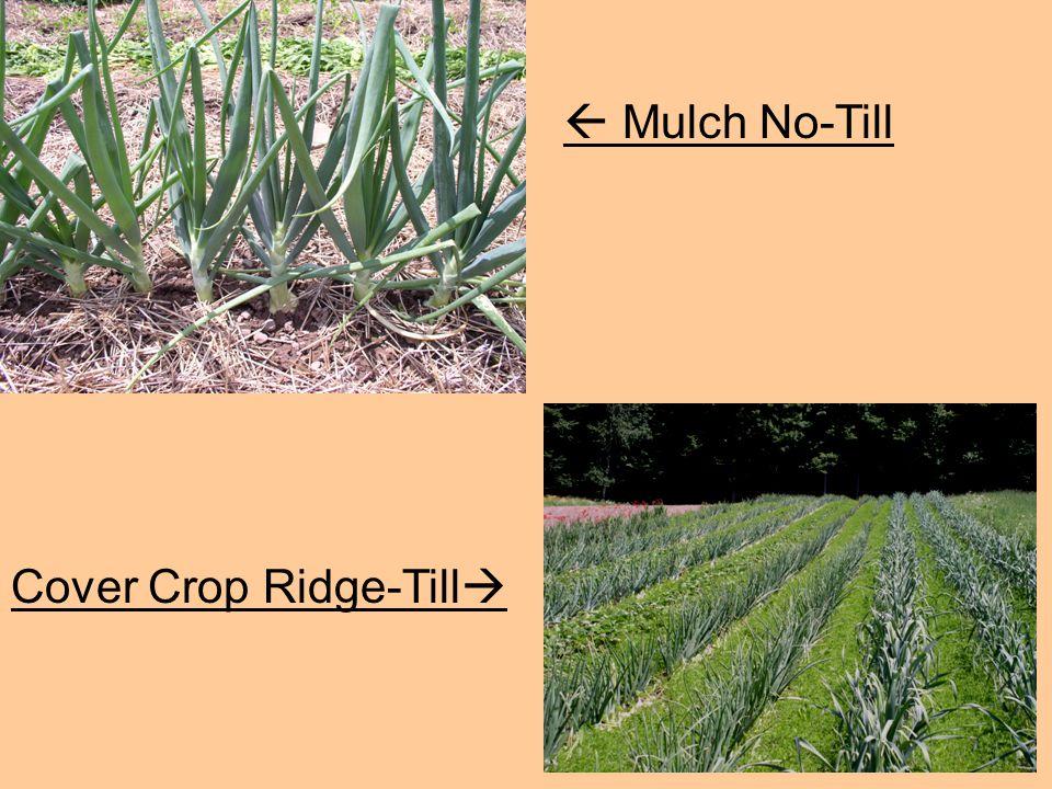  Mulch No-Till Cover Crop Ridge-Till 