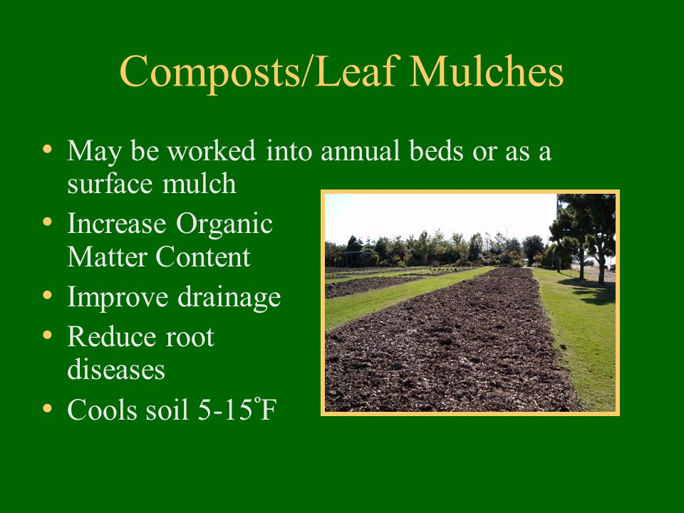 Composts/Leaf Mulches May be worked into annual beds or as a surface mulch Increase Organic Matter Content Improve drainage Reduce root diseases Cools