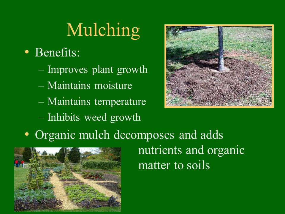 Mulching Benefits: –Improves plant growth –Maintains moisture –Maintains temperature –Inhibits weed growth Organic mulch decomposes and adds nutrients and organic matter to soils