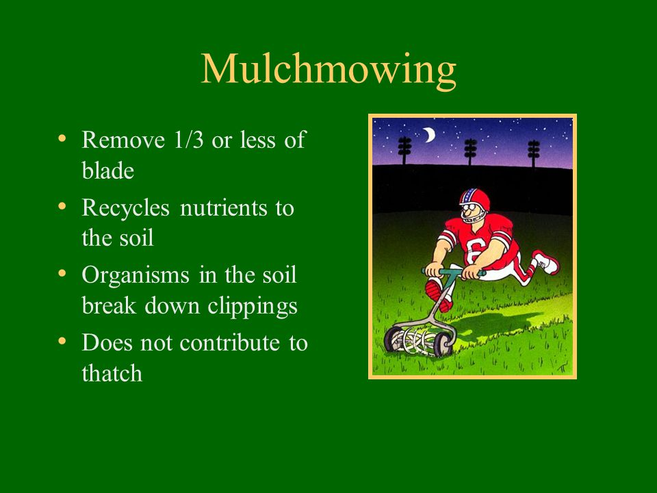 Mulchmowing Remove 1/3 or less of blade Recycles nutrients to the soil Organisms in the soil break down clippings Does not contribute to thatch
