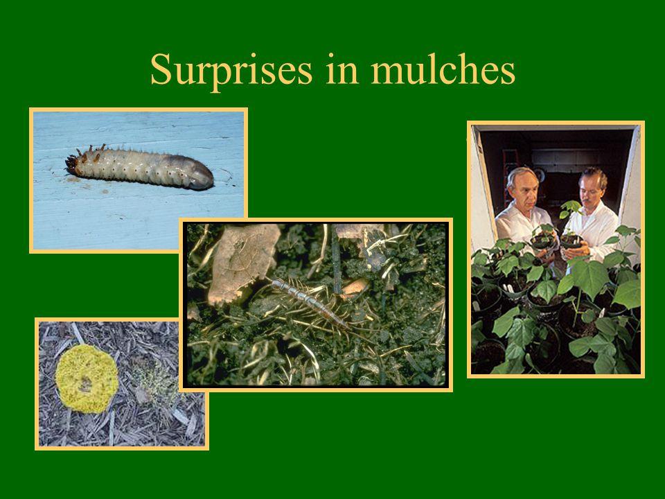 Surprises in mulches