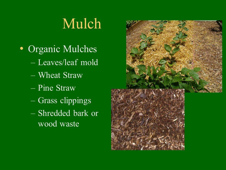Mulch Organic Mulches –Leaves/leaf mold –Wheat Straw –Pine Straw –Grass clippings –Shredded bark or wood waste