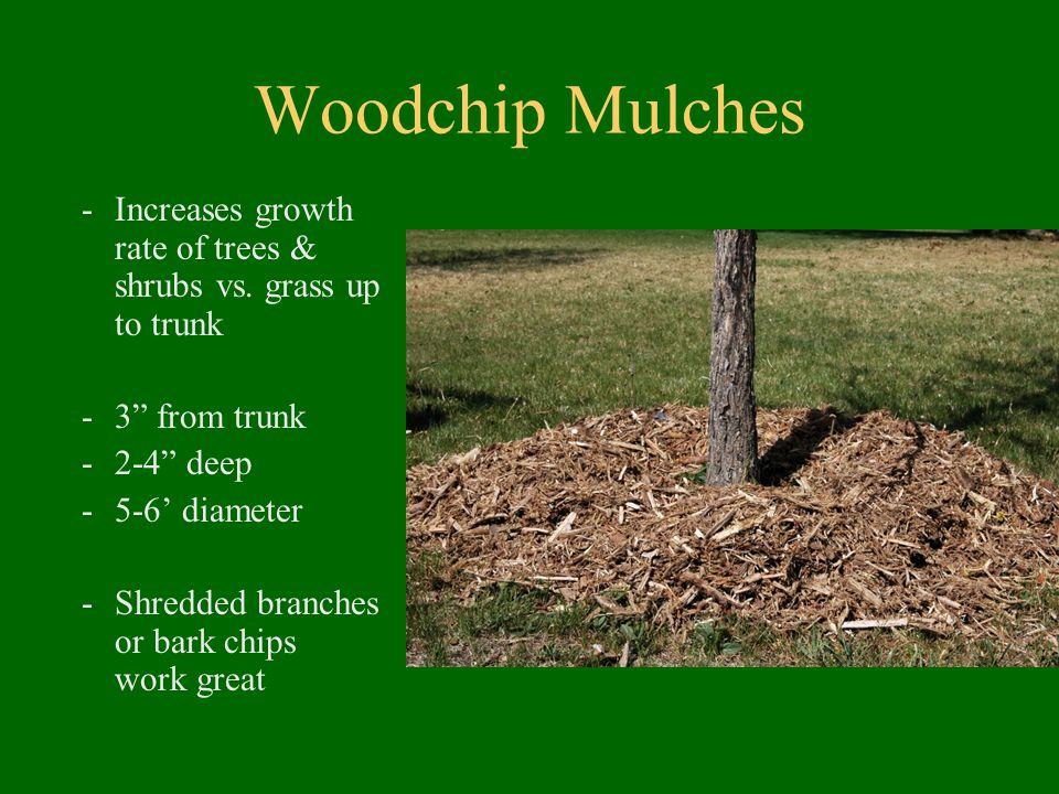 """Woodchip Mulches -Increases growth rate of trees & shrubs vs. grass up to trunk -3"""" from trunk -2-4"""" deep -5-6' diameter -Shredded branches or bark ch"""