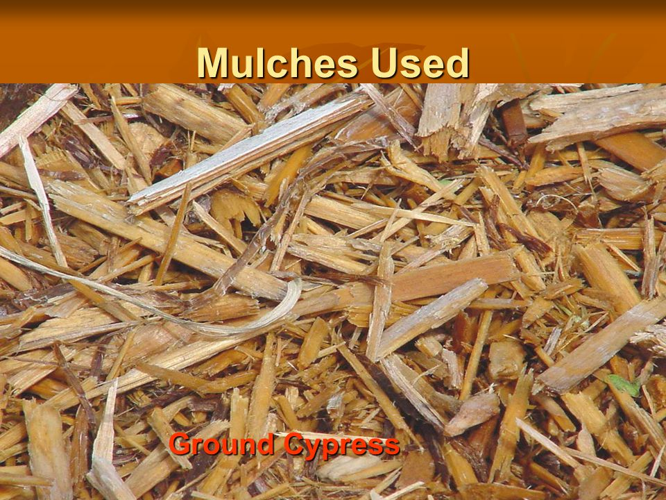 Mulches Used Ground Cypress