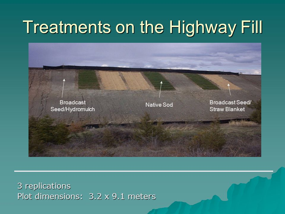Treatments on the Highway Fill 3 replications Plot dimensions: 3.2 x 9.1 meters Broadcast Seed/Hydromulch Native Sod Broadcast Seed/ Straw Blanket