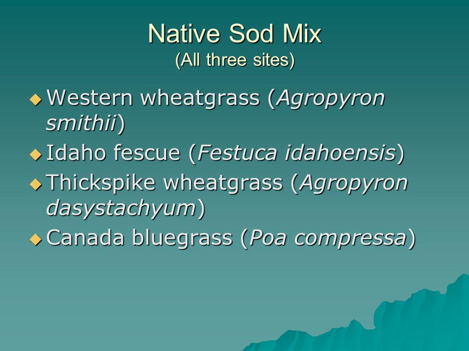 Native Sod Mix (All three sites)  Western wheatgrass (Agropyron smithii)  Idaho fescue (Festuca idahoensis)  Thickspike wheatgrass (Agropyron dasystachyum)  Canada bluegrass (Poa compressa)