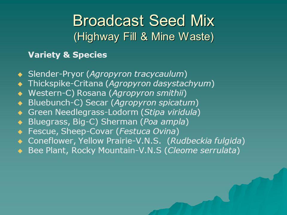 Broadcast Seed Mix (Highway Fill & Mine Waste) Variety & Species   Slender-Pryor (Agropyron tracycaulum)   Thickspike-Critana (Agropyron dasystachyum)   Western-C) Rosana (Agropyron smithii)   Bluebunch-C) Secar (Agropyron spicatum)   Green Needlegrass-Lodorm (Stipa viridula)   Bluegrass, Big-C) Sherman (Poa ampla)   Fescue, Sheep-Covar (Festuca Ovina)   Coneflower, Yellow Prairie-V.N.S.