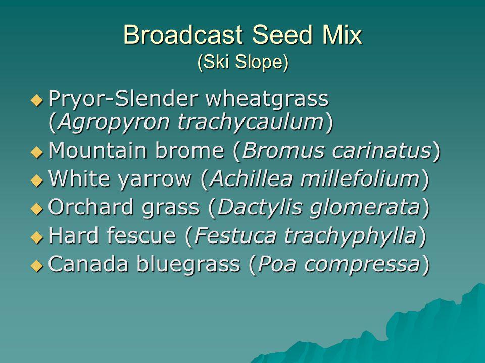 Broadcast Seed Mix (Ski Slope)  Pryor-Slender wheatgrass (Agropyron trachycaulum)  Mountain brome (Bromus carinatus)  White yarrow (Achillea millefolium)  Orchard grass (Dactylis glomerata)  Hard fescue (Festuca trachyphylla)  Canada bluegrass (Poa compressa)