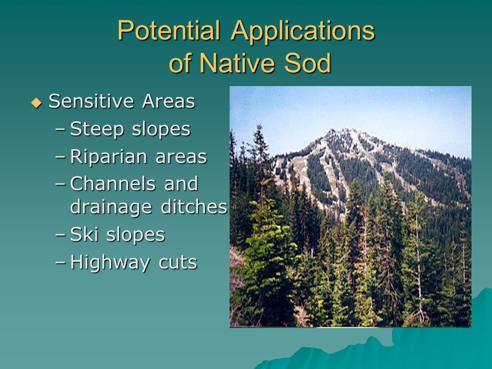 Potential Applications of Native Sod  Sensitive Areas –Steep slopes –Riparian areas –Channels and drainage ditches –Ski slopes –Highway cuts