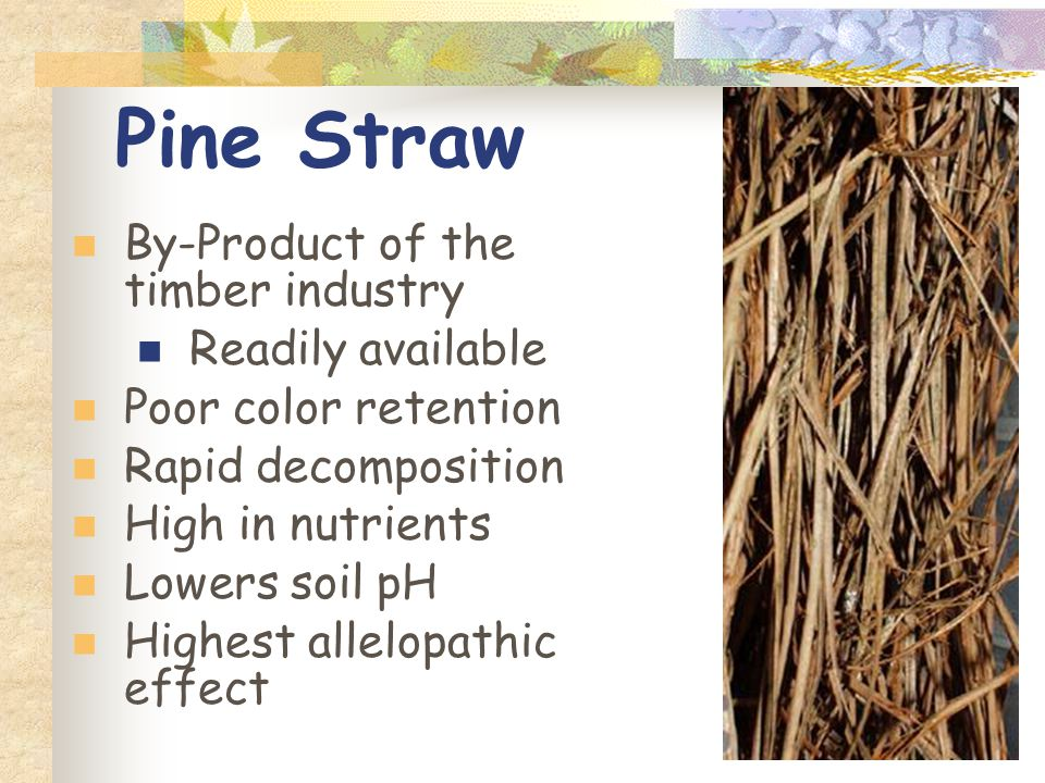 Pine Straw By-Product of the timber industry Readily available Poor color retention Rapid decomposition High in nutrients Lowers soil pH Highest allelopathic effect