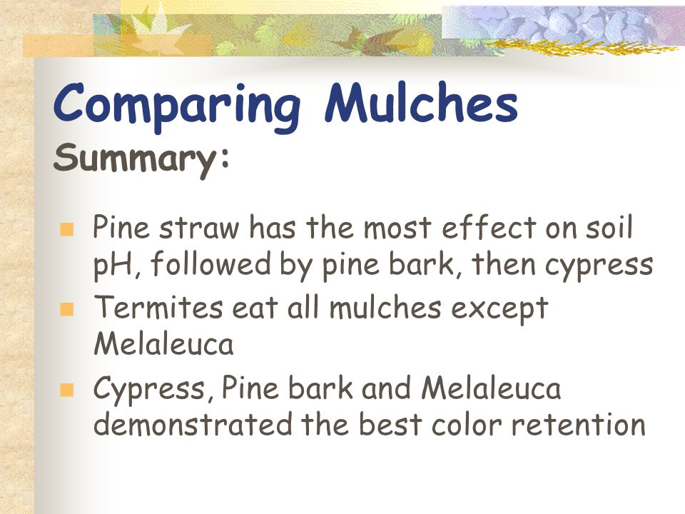 Comparing Mulches Summary: Pine straw has the most effect on soil pH, followed by pine bark, then cypress Termites eat all mulches except Melaleuca Cypress, Pine bark and Melaleuca demonstrated the best color retention