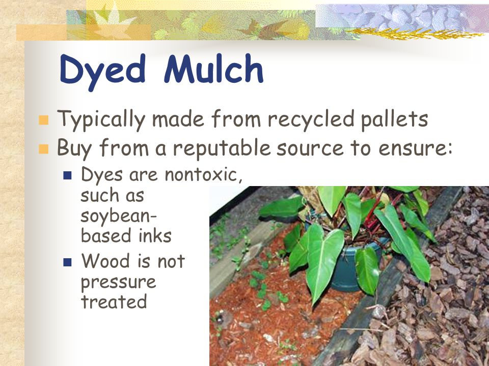Dyed Mulch Typically made from recycled pallets Buy from a reputable source to ensure: Dyes are nontoxic, such as soybean- based inks Wood is not pressure treated