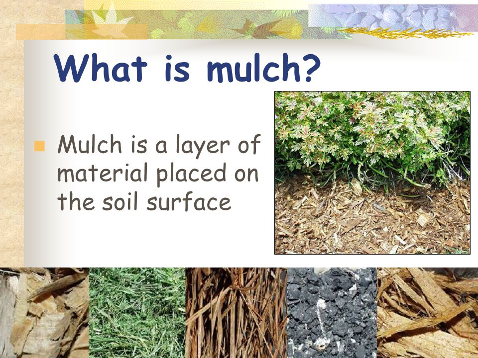 What is mulch Mulch is a layer of material placed on the soil surface