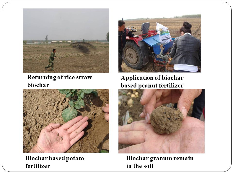 Returning of rice straw biochar Application of biochar based peanut fertilizer Biochar based potato fertilizer Biochar granum remain in the soil
