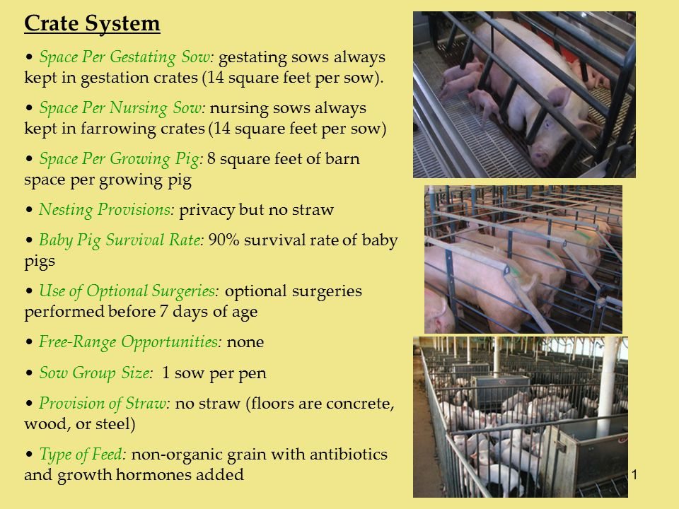 1 Crate System Space Per Gestating Sow: gestating sows always kept in gestation crates (14 square feet per sow).