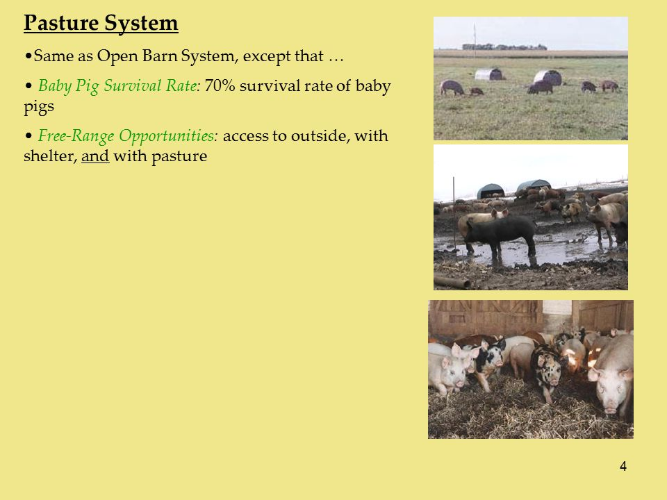 4 Pasture System Same as Open Barn System, except that … Baby Pig Survival Rate: 70% survival rate of baby pigs Free-Range Opportunities: access to outside, with shelter, and with pasture