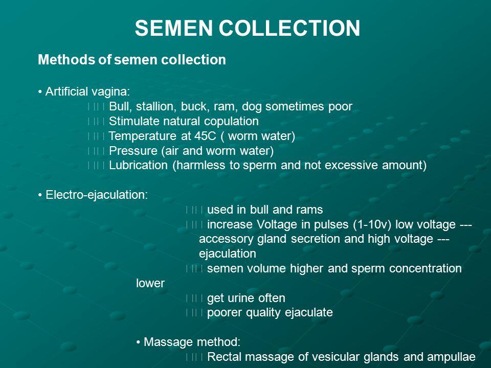 SEMEN COLLECTION Methods of semen collection Artificial vagina: Bull, stallion, buck, ram, dog sometimes poor Stimulate natural copulation Temperature