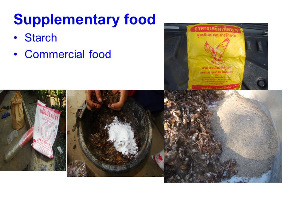 Supplementary food Starch Commercial food