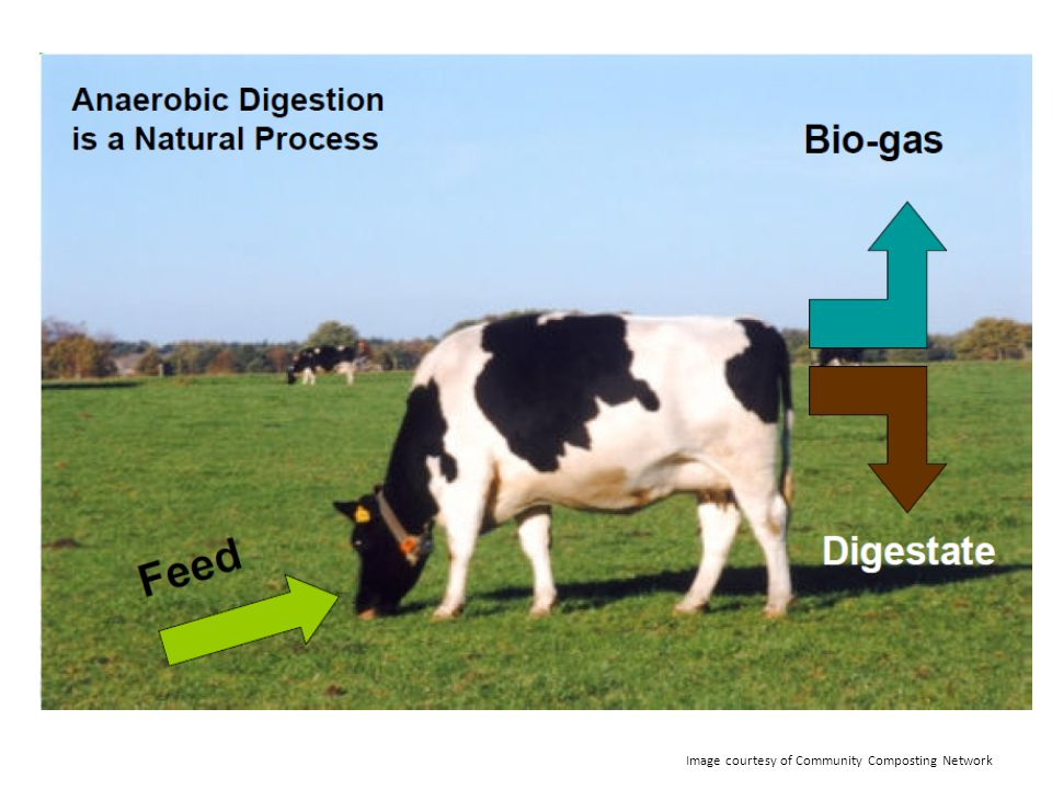 Image courtesy of Community Composting Network