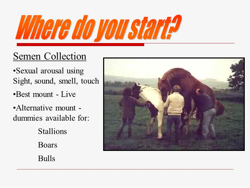 Semen Collection Sexual arousal using Sight, sound, smell, touch Best mount - Live Alternative mount - dummies available for: Stallions Boars Bulls