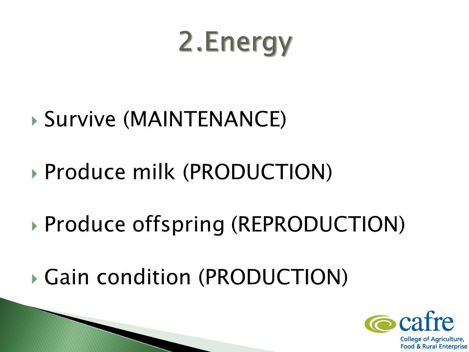  Survive (MAINTENANCE)  Produce milk (PRODUCTION)  Produce offspring (REPRODUCTION)  Gain condition (PRODUCTION)