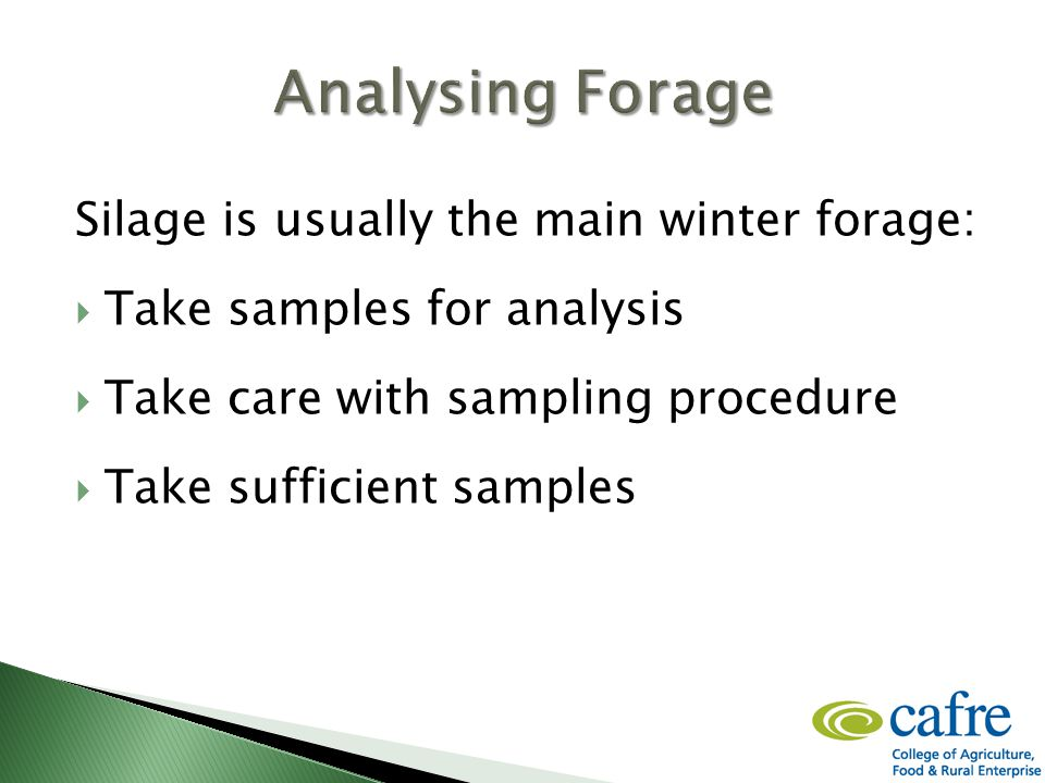 Silage is usually the main winter forage:  Take samples for analysis  Take care with sampling procedure  Take sufficient samples