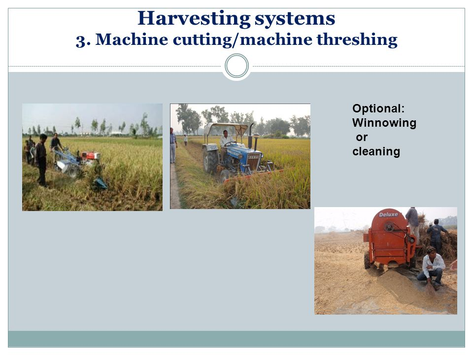 Harvesting systems 3. Machine cutting/machine threshing Optional: Winnowing or cleaning