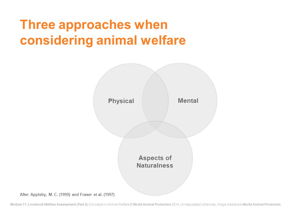 Module 11: Livestock Welfare Assessment (Part 2) Concepts in Animal Welfare © World Animal Protection 2014. Unless stated otherwise, image credits are