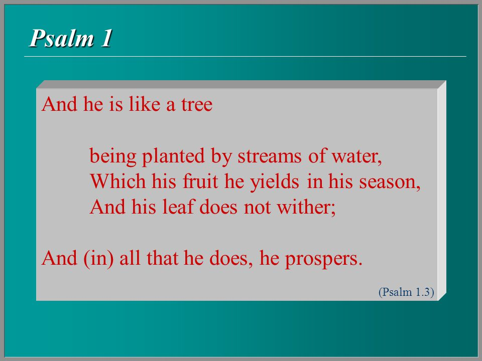Psalm 1  A tree transplanted from some dry spot (e.g.