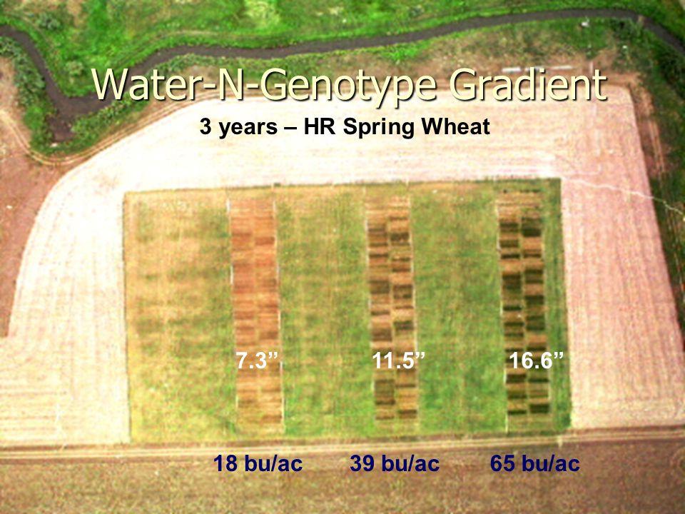 2/20/2007 Water-N-Genotype Gradient 3 years – HR Spring Wheat 7.3 18 bu/ac 11.5 39 bu/ac 16.6 65 bu/ac
