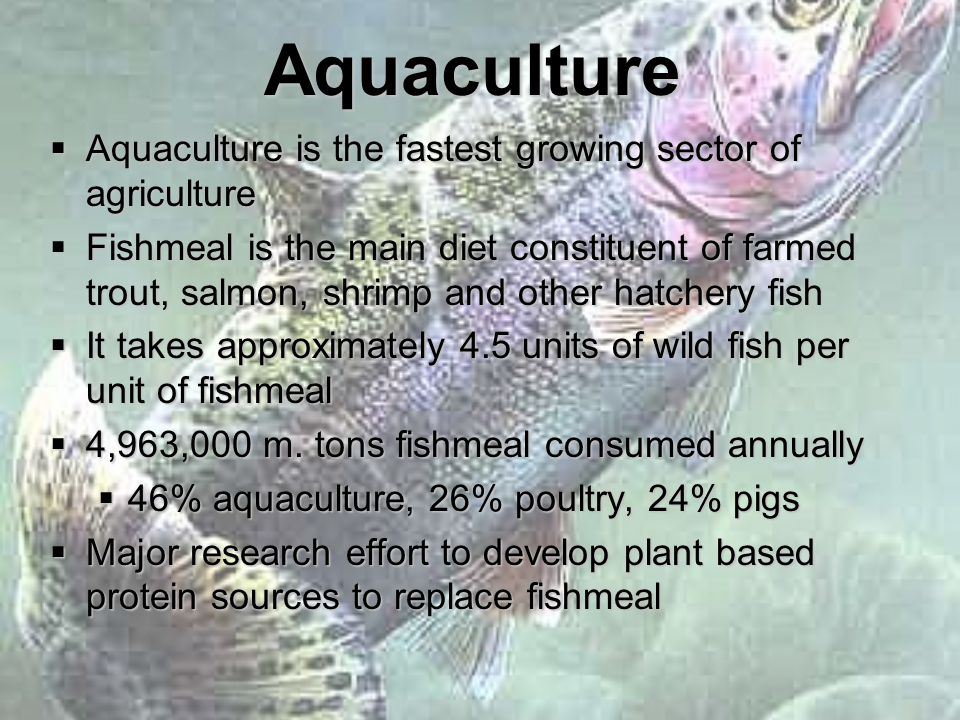 Aquaculture  Aquaculture is the fastest growing sector of agriculture  Fishmeal is the main diet constituent of farmed trout, salmon, shrimp and other hatchery fish  It takes approximately 4.5 units of wild fish per unit of fishmeal  4,963,000 m.